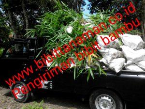 pengiriman-bambu-petung-ke-kalimantan